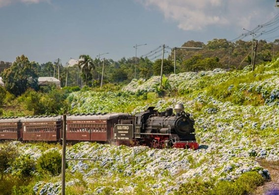 Passeio de Trem em Gramado