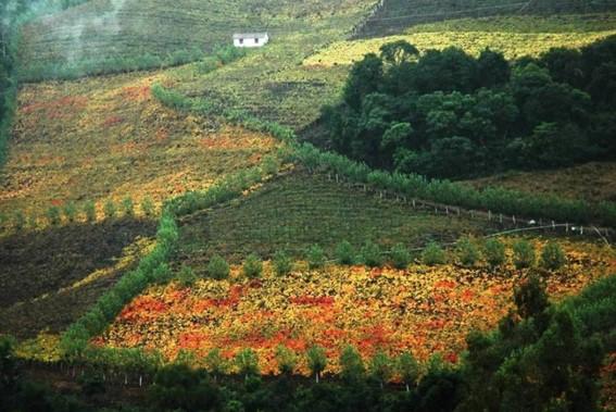 Tour Uva e Vinho em Promoção